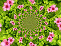 Flower kaleidoscope Royalty Free Stock Photo