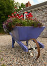 Flower Laden Wheelbarrow Royalty Free Stock Photo