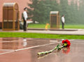 Flower laid to the Tomb of the Unknown Soldier Royalty Free Stock Photo