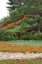 Flower land Stock Photography