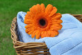 Flower on Laundry Stock Images