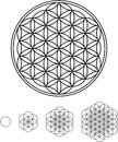 Flower of life development from a single circle to a complex symbol Royalty Free Stock Images