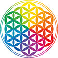 Flower of life rainbow colors with a geomtrical figure composed multiple evenly spaced overlapping circles a decorative motif Stock Photos