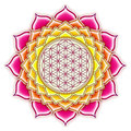 Flower of live lotus illustration a Royalty Free Stock Images