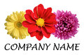 Flower logo a great for the company Royalty Free Stock Photos
