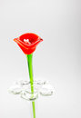 Flower made of glass in red and blue color in vase on grey backg Royalty Free Stock Photo