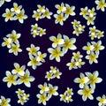 Flower magnolia. Pattern Royalty Free Stock Photo