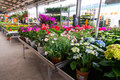 Flower market in hornbach store romania Stock Image
