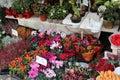 Flower Market Salzburg