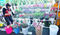Flower market in spring festival Stock Photos