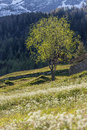 Flower meadow and flourishing trees in south tyrol italy Stock Photos