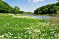 Flower meadow in the foreground Royalty Free Stock Photography