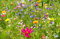 Flower meadow many different flowers on alpine bavaria germany Royalty Free Stock Images