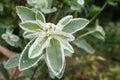 Flower, Morning Dew, Nature, G...