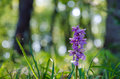 Flower in morninglight early purple orchid morning sunshine after rain Stock Photo
