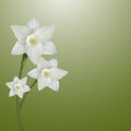 Flower of narcissus on a gentle green background illustration Stock Photography