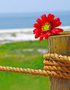 Flower on nautical post Royalty Free Stock Photo