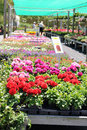 Flower Nursery Stock Image