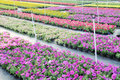 Flower nursery garden Stock Photo