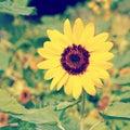 Flower old vintage retro style Stock Photo