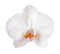 Flower orchid isolated on white background Royalty Free Stock Images