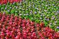 Flower ornament in the tsaritsino park Stock Photography