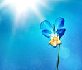 Flower over blue Stock Photography
