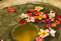 Flower Petals in Water Bowl Royalty Free Stock Photo