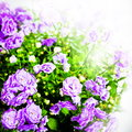 Flower photo in vintage style on background Royalty Free Stock Photo