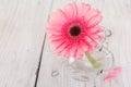 Flower pink gerbera in vase Royalty Free Stock Photo