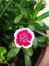 stock image of  Flower