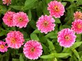 Flower pink white green red beautiful background Stock Images