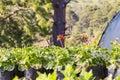 Flower plant propagation Royalty Free Stock Photo