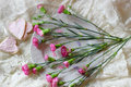 Flower plate romantic cute pink decoration ribbon wedding sweet love Stock Photos