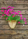 Flower pot on a brown wooden wall Stock Photography