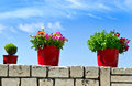 Flower pot with sea background Royalty Free Stock Photo