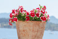 Flower Pot on Stone Wall Royalty Free Stock Photo