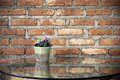 Flower pot on the table with glass brick wall background. Royalty Free Stock Photo