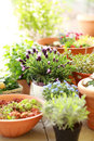 Flower pots Stock Image