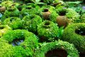 Flower pots covered with moss ina tropical garden shallow depth of field Royalty Free Stock Photo