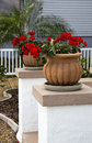 Flower pots and flowers decorative with geraniums sit n the sun on posts Stock Photography