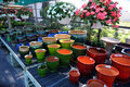 Flower Pots in Nursery Royalty Free Stock Image