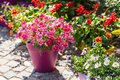 Flower pots outdoor for small garden patio or terrace Stock Images