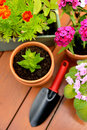 Flower pots and shovel pot in green garden Royalty Free Stock Photo