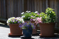 Flower pots on a terrace Royalty Free Stock Photo