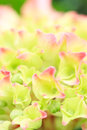Flower power a in the morning summer sun Royalty Free Stock Images