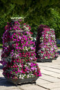 Flower pyramids in a city square Stock Images