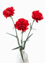 Flower red carnations bouquet isolated on white background Royalty Free Stock Images