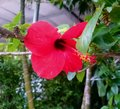 Flower red near Royalty Free Stock Photography