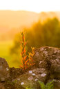 Flower on a rock reclaims wall at sunset Stock Photos